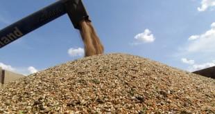 انخفاض أسعار الحبوب